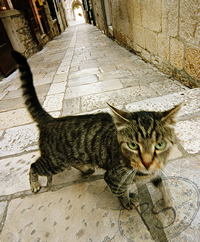 Biblical Stone in a Medieval Alleyway with a Maltese cat